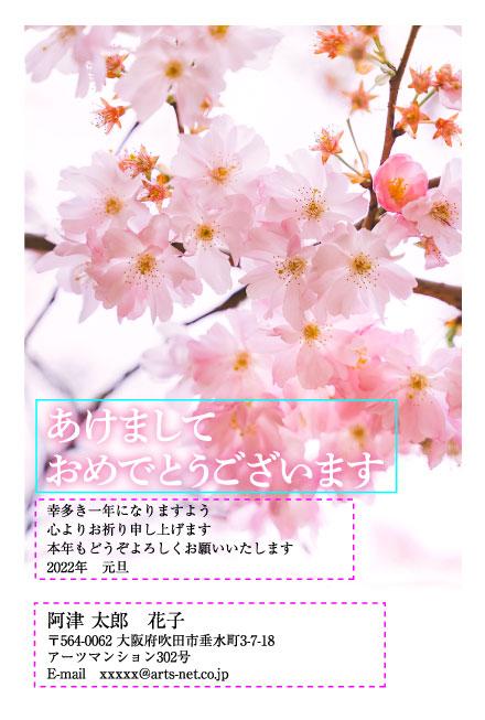 満開の桜で春を先取りする干支なし年賀状(おたより本舗)