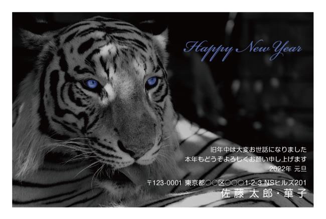 目が青く光るトラのフォトデザイン年賀状(ネットスクウェア)